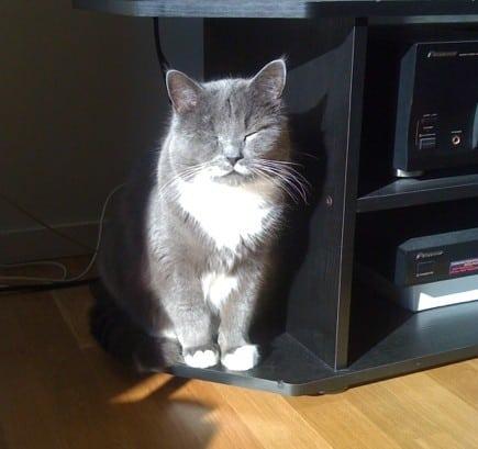 Solkatt, katt njuter av solen