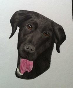 Målning i akvarell föreställande en hund, svärföräldrarnas labradorblandning Kajsa
