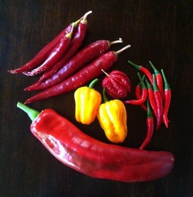 Blandad chili, scotch bonnet, piri piri, spetspaprika, habanero