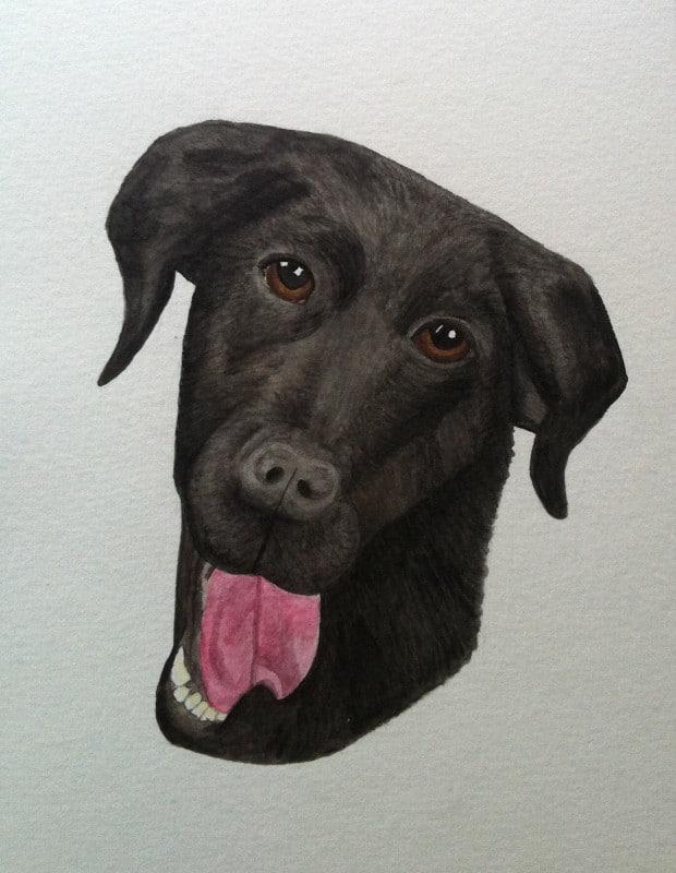 Hund i akvarell. Måla svart labrador.