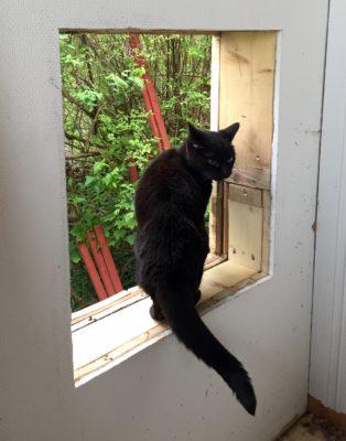 Katt tittar ut genom hål i huset