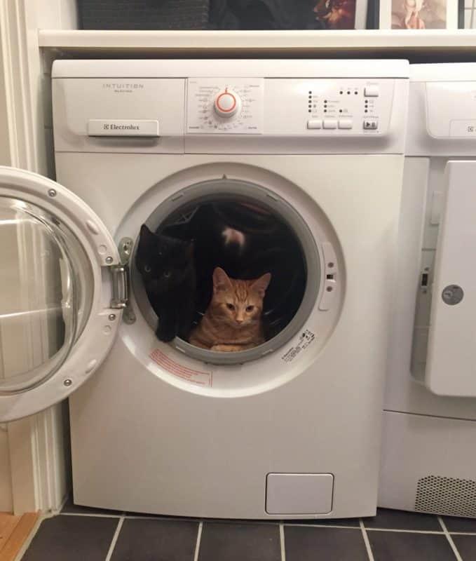 Katt, kattunge. Fjodor och Finkel i tvättmaskinen, jag får hjälp med precis allt!