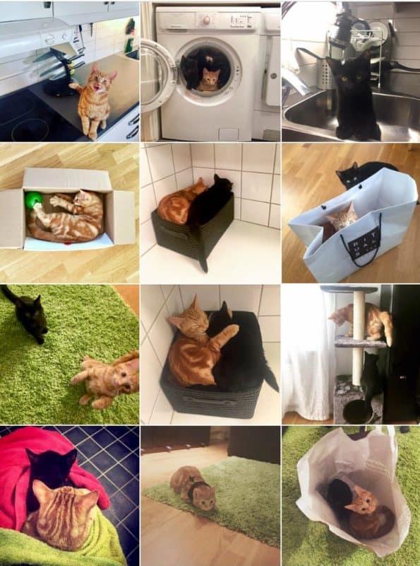 Katter! Mina kattungar på Instagram