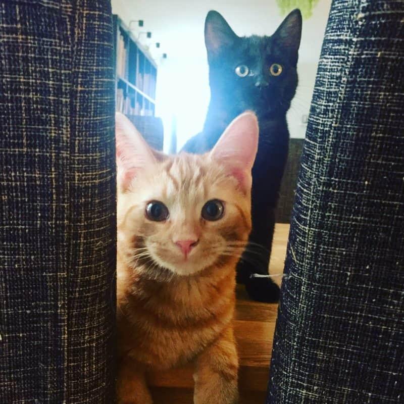 Katt, Fjodor och Finkel