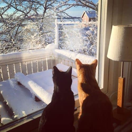 Katter i fönster, Fjodor och Finkel, utsikt på lantstället