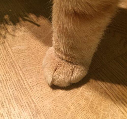 Katt,  en liten tass, Fjodor.