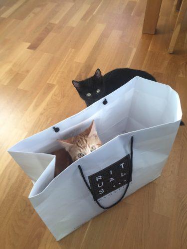 Katt i påse, Fjodor och Finkel gillar påsar och kartonger!