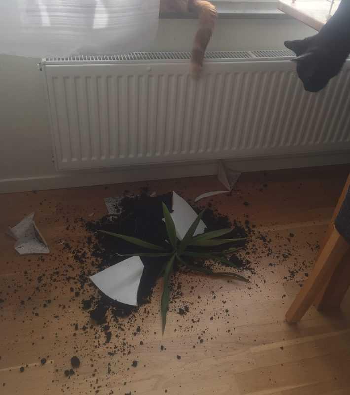 Katt och krossad blomkruka, blomma