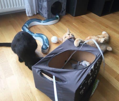 Fjodor och Finkel, orange katt och svart katt leker. Livet i lägenheten är annorlunda än på landet.