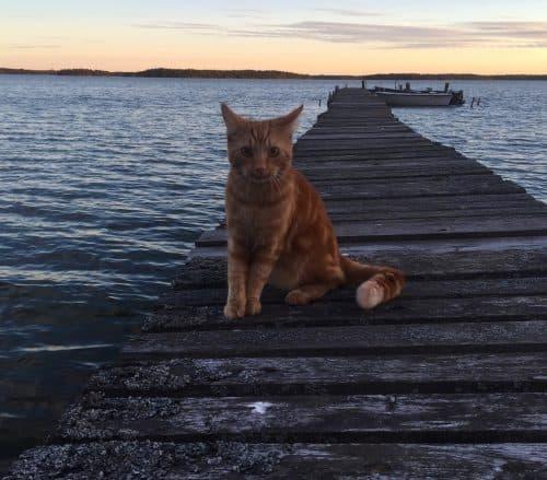 Orange katt på bryggan, Fjodor skeppskatt