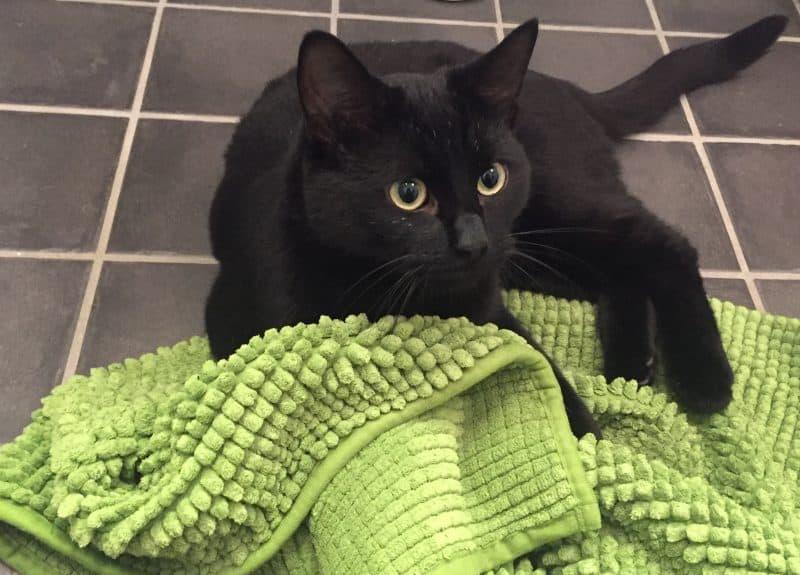 En liten svart katt, Finkel, min galning