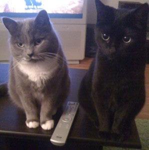 Mina katter! Söt grå katt och svart katt.