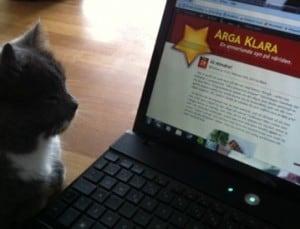 Grå katt och dator