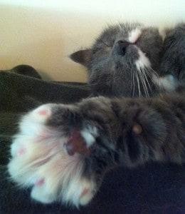 katten sträcker ut en stor tass, snoozar lite och somnar om
