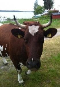 en ko lite för nära...