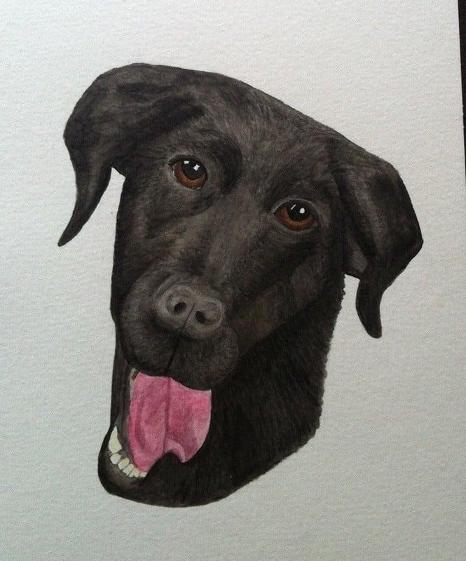 Akvarellmålning föreställande en hund, svärföräldrarnas labradorblandning Kajsa. Har fått pennor att måla med också!