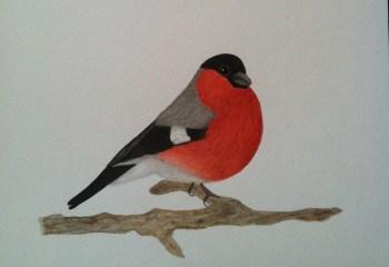 Akvarell domherre. Fri som en fågel