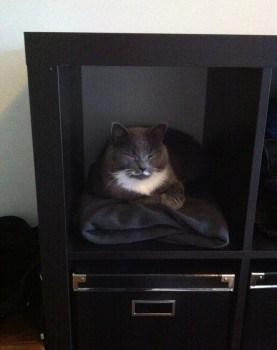 Min grå katt ligger i hyllan och sover. Kattsäng.