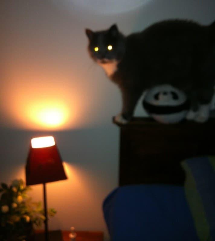 Lolcat laserkatt