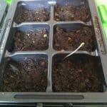 Framsteg i odling!