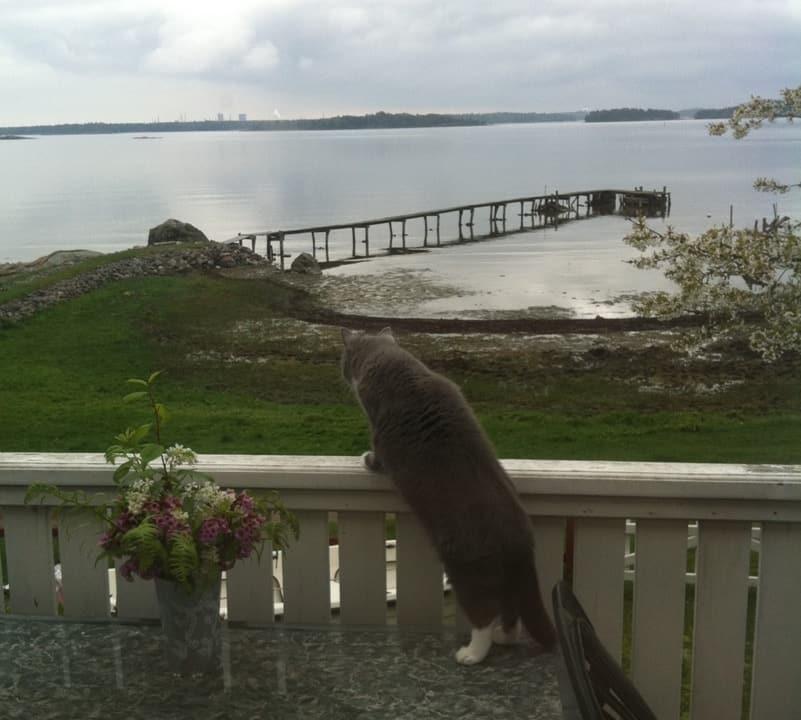 Min söta grå katt är ute och ser sig om på lantstället. Allt är stilla men spännande! Brygga.