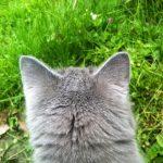 Trappa för katter