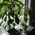 Grönsaker och växter