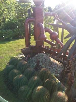 kaktusmaskin i Göteborgs trädgårdförening