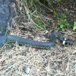 Att vara rädd för ormar