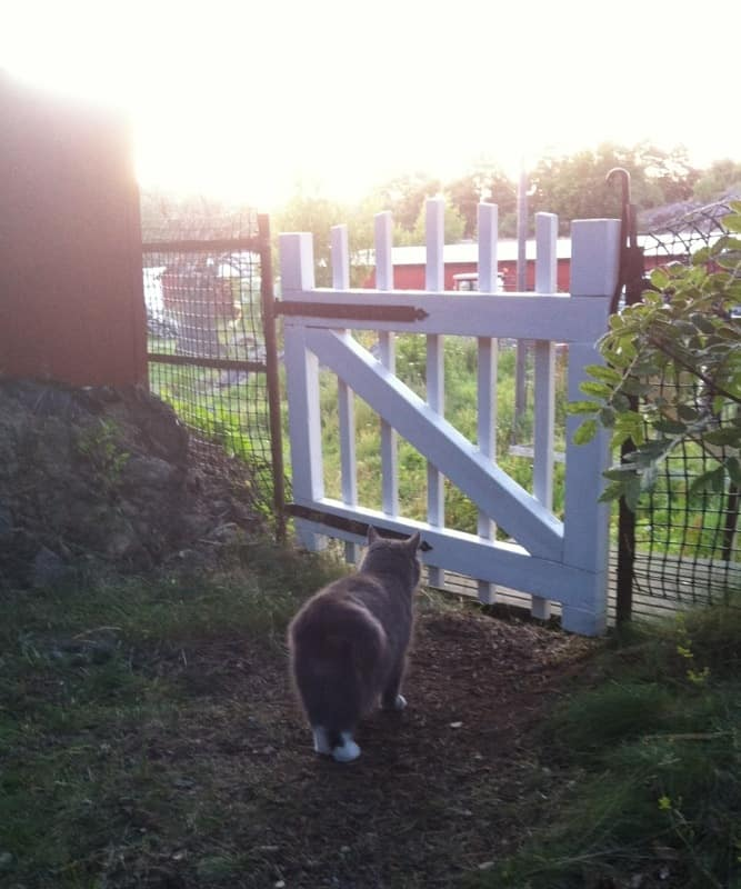 Söt katt står vid ett staket och ser drömmande ut. Ibland längtar man bort.