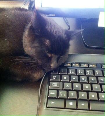 Min svarta katt sover på tangentbordet, på escape-tangenten. Vill han fly?