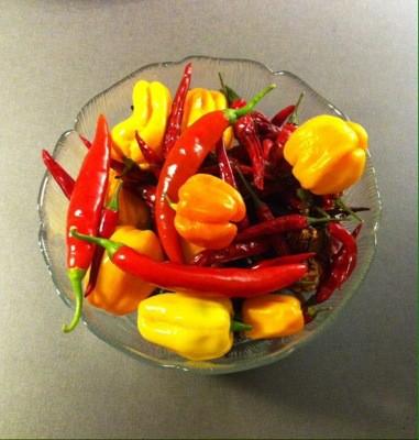 Skål med blandad chili. Ju mindre, desto starkare? Om en död växt.