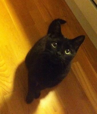 Svart katt ser på när jag äter räkor... Konstigt när den andra är borta.