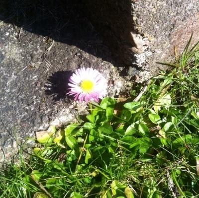 Blomma i vårsol