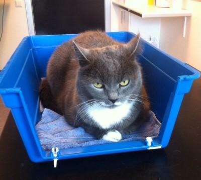 Grå katt i bur