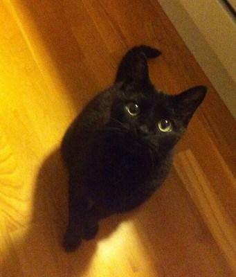Min svarta katt Bacon fyller år! Grattis! Katten ingår i packning till lantstället!