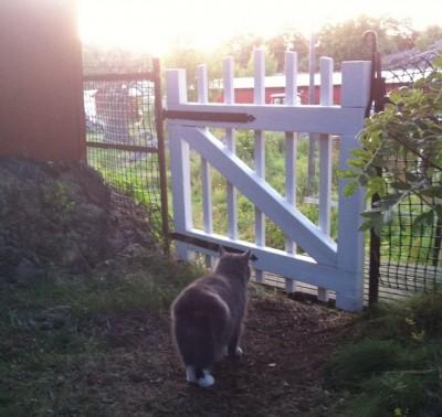 Min älskade grå katt har gått över till andra sidan. Nu flyttar vi snart hem, med en katt mindre.