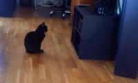 Katt lyssnar på musik