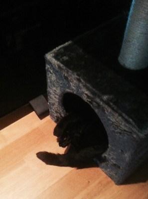 Katt i kattsäng med klätterträd. Har lämnat tillbaka hunden.