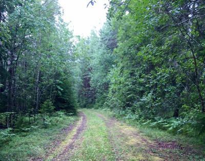 Skog, vår sovplats på en roadtrip