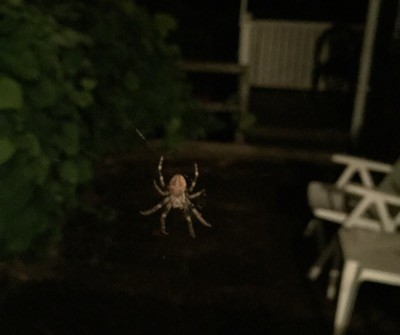 Monsterspindlar! Stor spindel