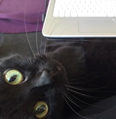 Svart katt vid datorn. Min katt är alltid i vägen! En undersökning visade att han är frisk som en nötkärna.