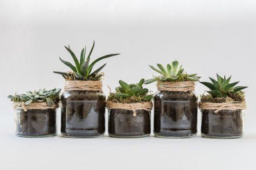 Gröna plantor i krukor