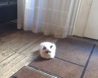 Kattunge i väntrummet hos Dr. Feelgood. Bra terapi i stället för behandling!
