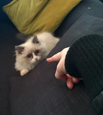 Kattunge i väntrummet, en vanlig dag hos doktorn