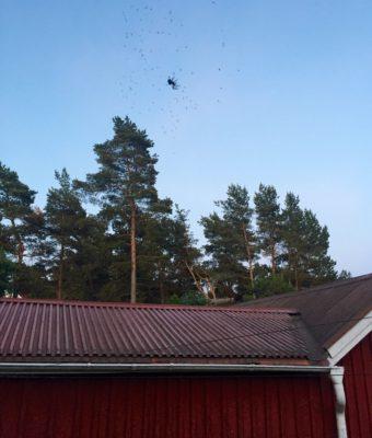 Spindel. Spindlarna syns bra när det är ljusa nätter!