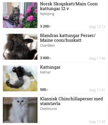 Kattungar till salu på Blocket