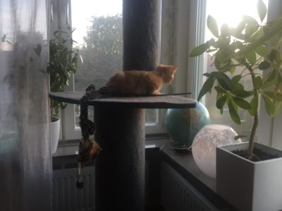 Orange kattunge, Fjodor