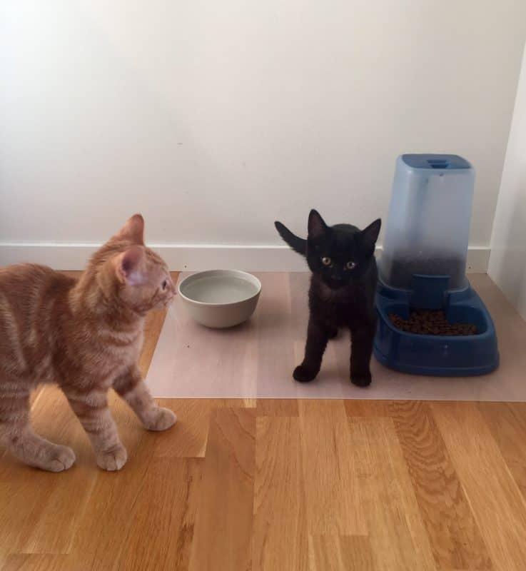 Katt, kattunge. Fjodor och Finkel