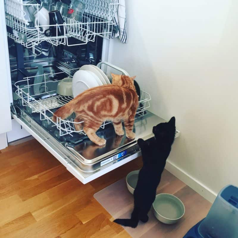 Katt, kattunge. Fjodor och Finkel i diskmaskinen, jag får hjälp med precis allt!